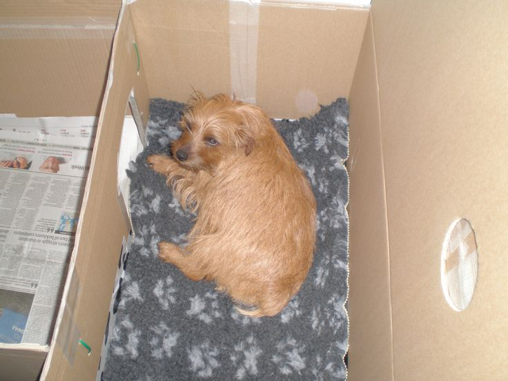 How To Build A Whelping Box For Small Dogs Dogs Boxes