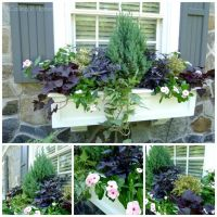 19 Best images about Planting Ideas on Pinterest | Gardens ...