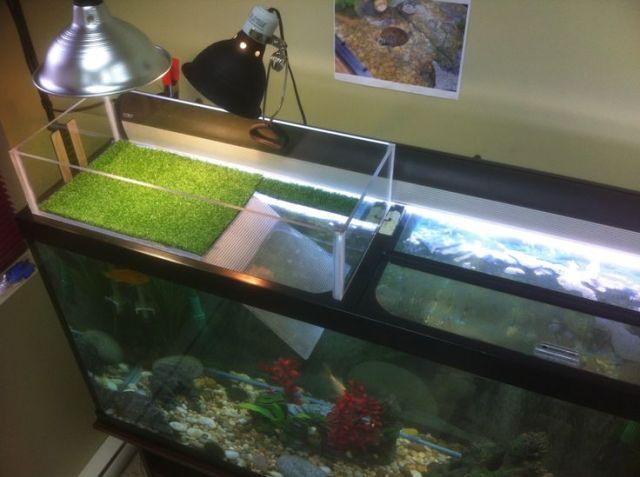 Turtle Tank Ideas, Turtle Tanks Diy, Turtle Habitat, Turtles Tank