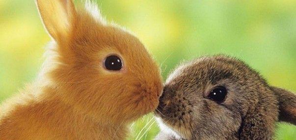 Cute Heart Wallpapers Download Deze Konijntjes Geven Elkaar Kusjes Oh Zo Schattig