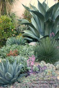 Agave garden | Desert Landscaping | Pinterest | Gardens ...