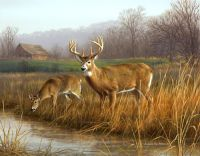 25+ best ideas about Deer Paintings on Pinterest | Hunting ...