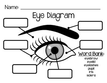 eyebrow pain diagram