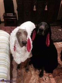 Little Black Sheep Dog Costume | Sheep dogs, Traditional ...