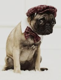 cute animals wearing clothes - Bing Images | Cute Animals ...