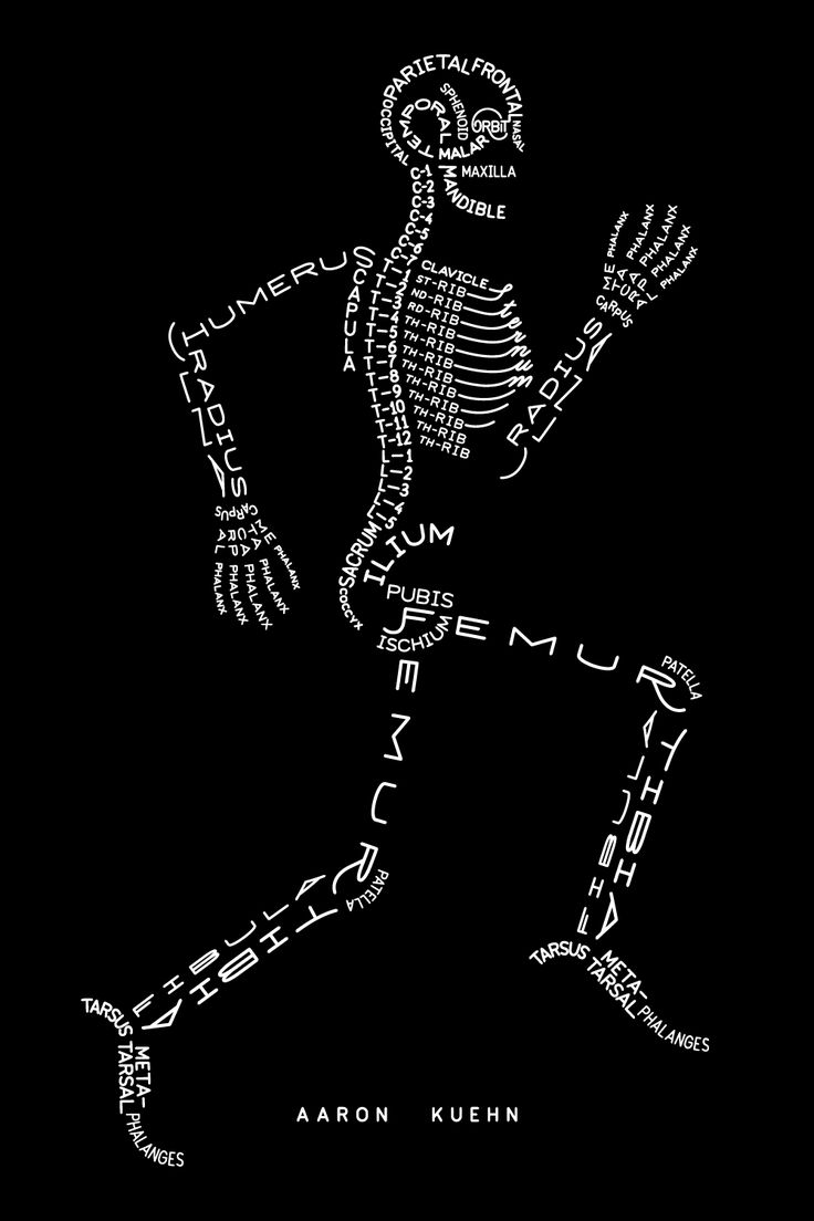 Love this drawing using the correct names for the bones of the ...
