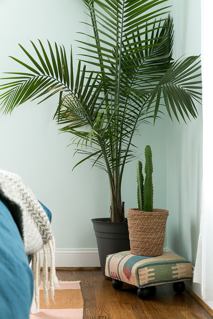 Ikea House Plants A Finished Master Bedroom With Behr | The Fresh Exchange