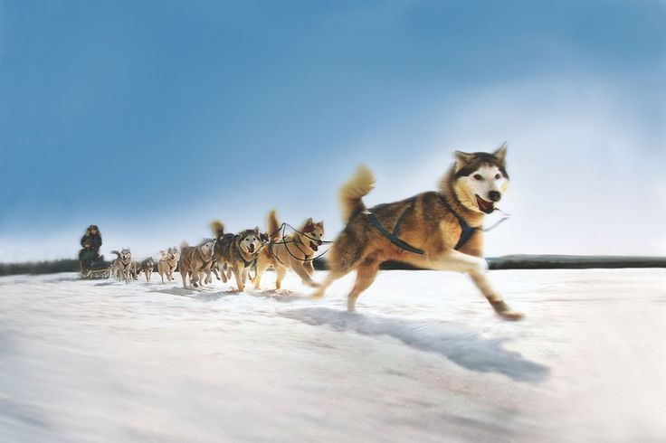 Cozy Fall Hd Wallpaper Sleigh Dogs Dog Sled Team I Just Love This Picture