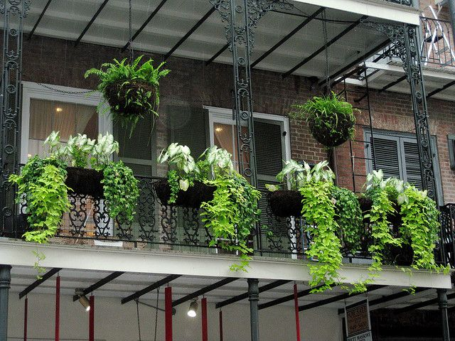 Amenagement Exterieur Orleans Balcony Hanging Plants • Helpfulgardener.com Gardening Forum
