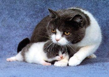 Cute Little Kitten Desktop Wallpapers Free Cat Screensavers Free Photo Wallpapers Gt Animals