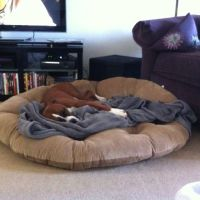 Get a nice BIG dog bed for cheap. Papasan cushion from ...