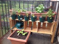 17 Best ideas about Balcony Herb Gardens on Pinterest ...