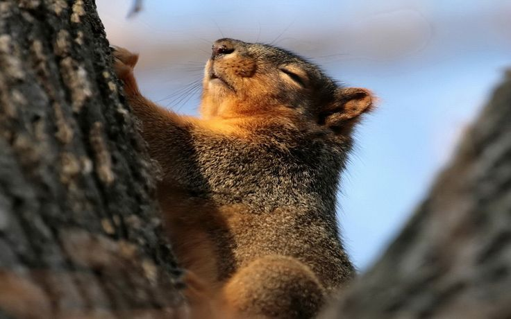 Cute Sleeping Babies Wallpapers 18 Best Images About Peaceful Pets On Pinterest