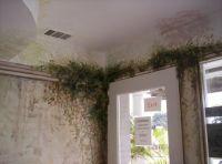 Area above front door painted with ivy vines #murals # ...