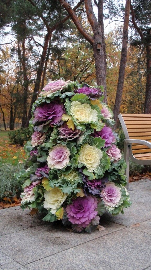 1000+ Ideas About Cabbage Plant On Pinterest | Gardening