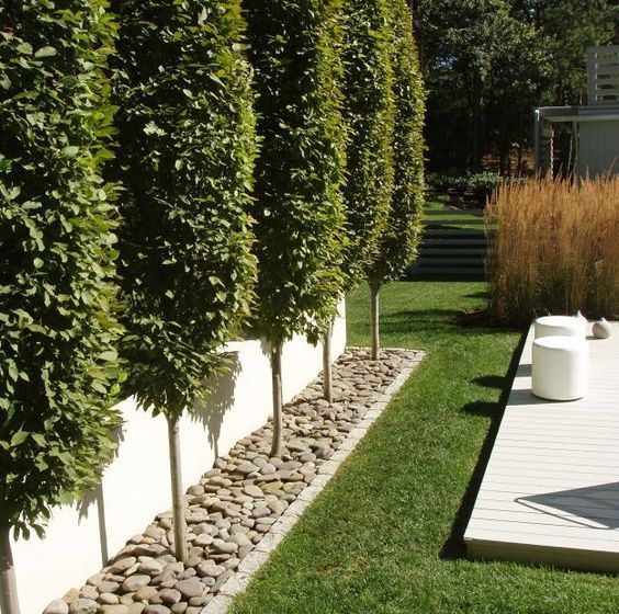 Best 20+ Privacy trees ideas on Pinterest