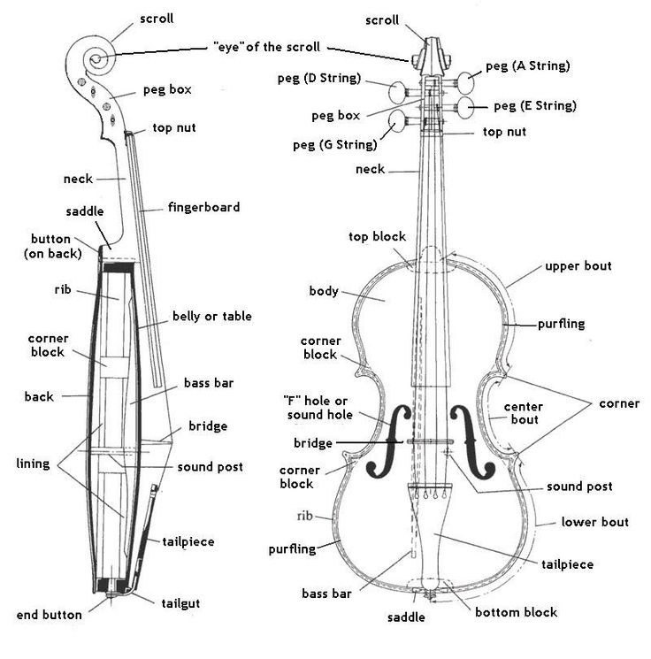 violin bow diagram parts of the violin