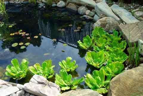 25+ best ideas about Small garden ponds on Pinterest