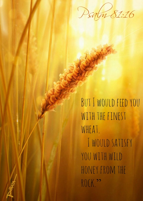 Fall Season Live Wallpaper For Android 17 Best Images About Psalms On Pinterest Scriptures