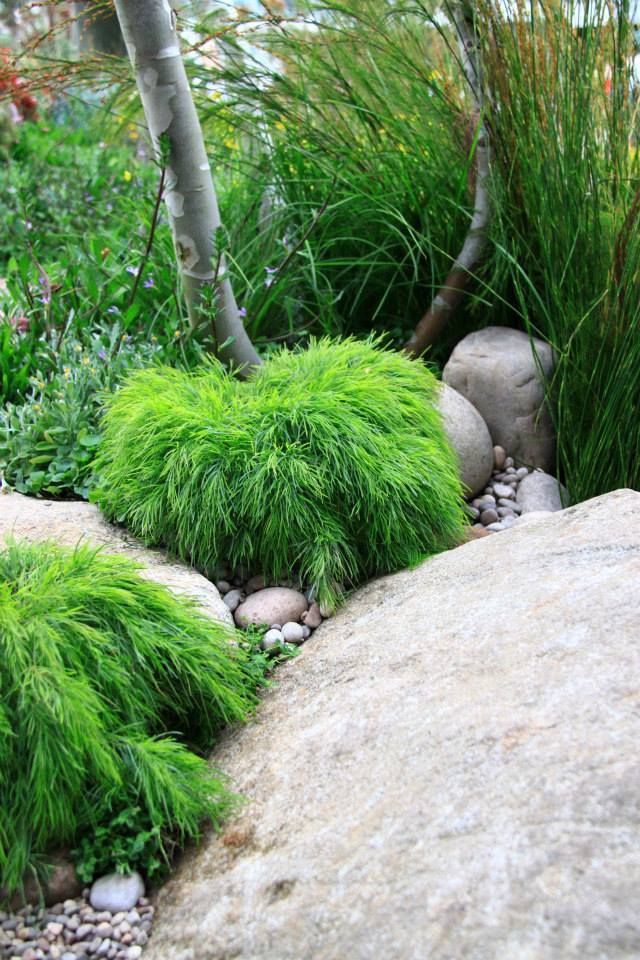 1000+ Ideas About Native Gardens On Pinterest | Australian Native