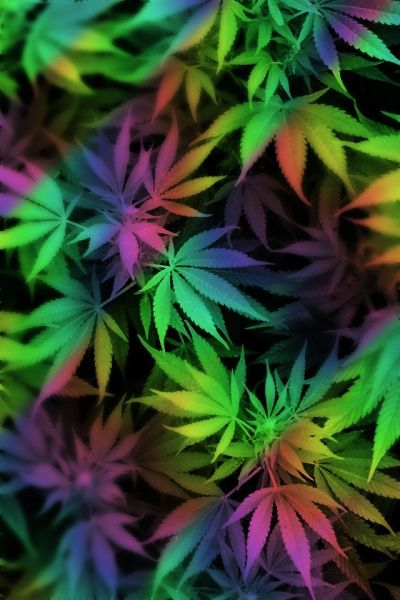 25+ best ideas about Weed wallpaper on Pinterest | Smoke weed wallpaper, Cannabis wallpaper and ...