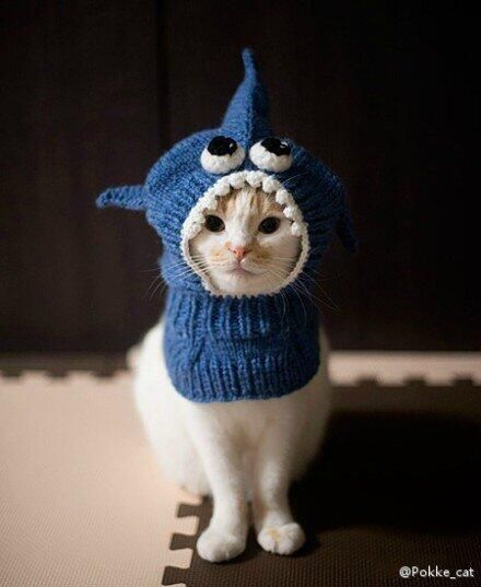 19 Best Images About Shark Week On Pinterest Nice