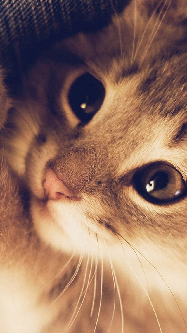 The Best Wallpaper Ever For Iphone Cute Cat Kitten Nature Animal Warm Macro Iphone 5s