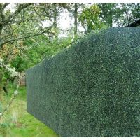 1000+ ideas about Boxwood Hedge on Pinterest | Artificial ...