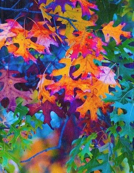 Cell Phone Fall Wallpaper 155 Best Images About Pretty Leaves On Pinterest Water