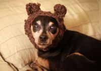 17 Best ideas about Ewok Dog Costume on Pinterest | Baby ...