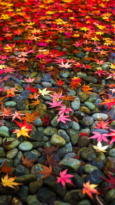 25+ best ideas about Fall wallpaper on Pinterest | Iphone wallpaper fall, Fall background and ...
