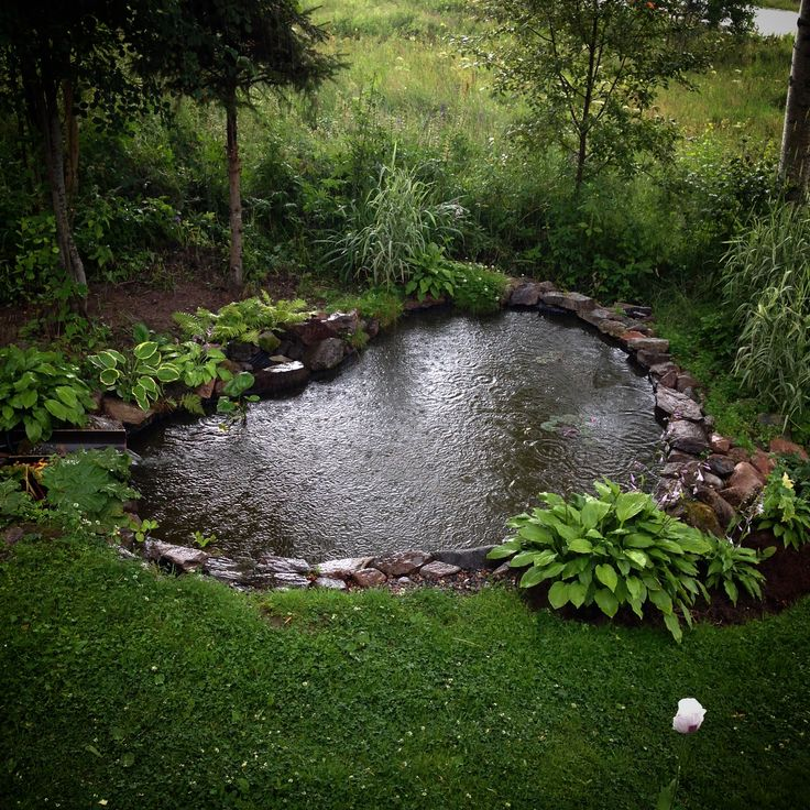 garden pond + hostas
