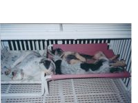 12 best images about Dog Cages on Pinterest   Cold weather ...