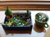 Indoor fairy garden and teacup garden | Fairy Garden Ideas ...