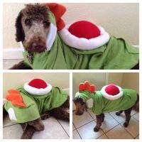 DIY Yoshi dog costume | my own photos | Pinterest ...