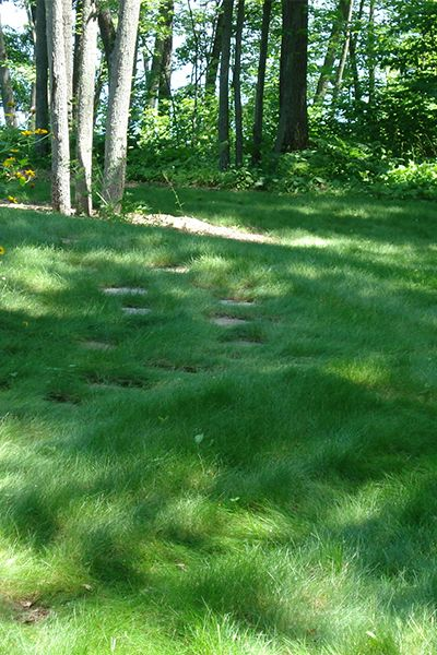 1000+ Ideas About Lawn Seed On Pinterest | Grass Alternative