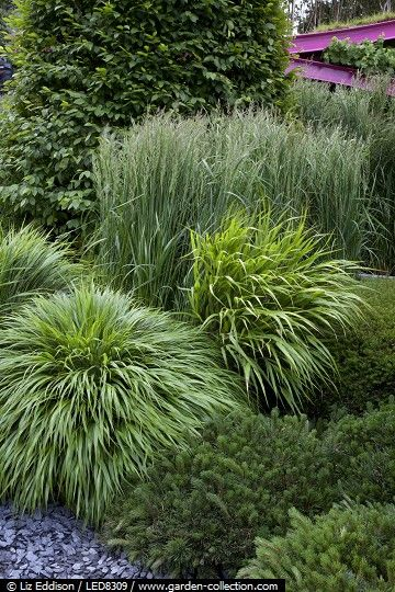 1000+ Ideas About Different Types Of Grass On Pinterest | Types Of
