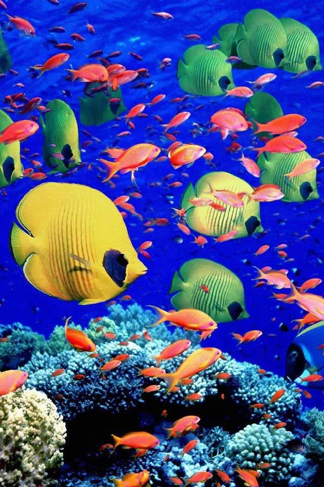 Clown Fish Wallpaper Iphone 6 Plus 100 Best Images About Beautiful Wallpaper On Pinterest
