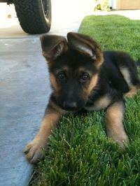 Free Dog House Plans For German Shepherds - WoodWorking ...