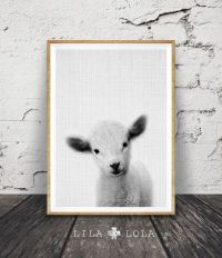 17 Best ideas about Baby Sheep on Pinterest | Sheep, Baby ...