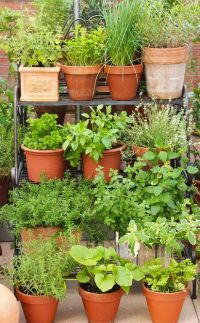 17 Best ideas about Herbs Garden on Pinterest | Growing ...