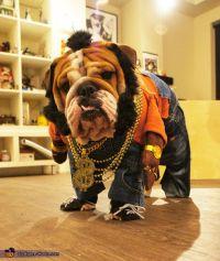 English Bulldogs In Costumes