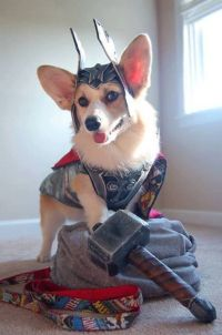 Corgi Dog Thor Costume | Halloween costumes for the ...