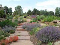 xeriscape small front yard | Xeriscape Landscaping ...