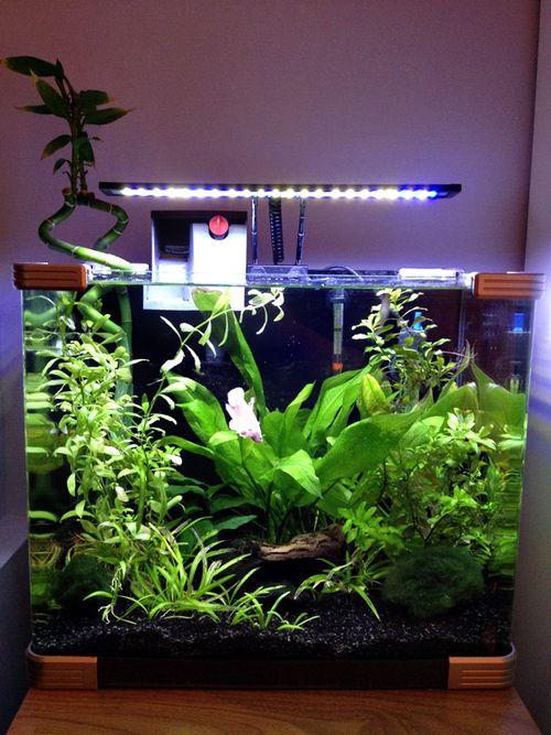 Betta nano tank, fully planted: Aquarium Aquascapes, L Aquarium, Nano