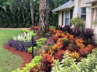 25+ best ideas about Florida Landscaping on Pinterest