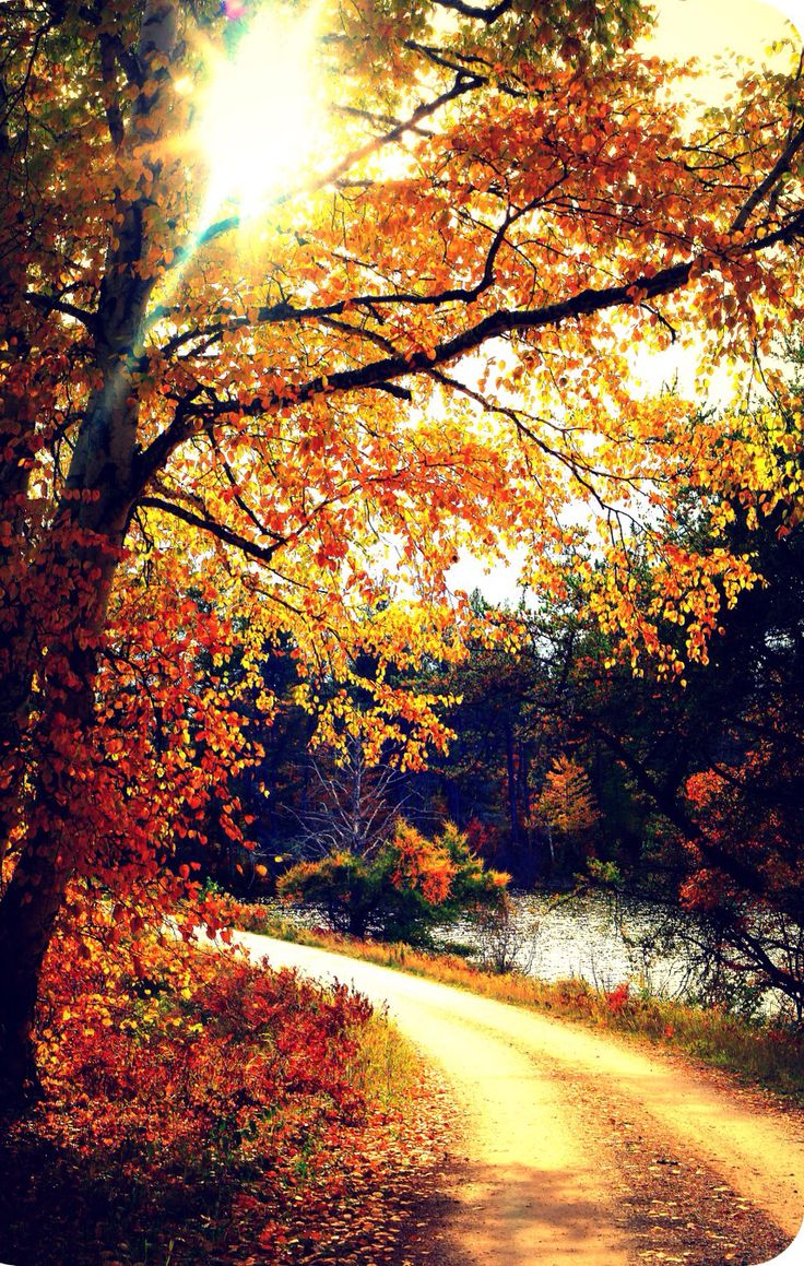 Christian Fall Iphone Wallpaper 17 Best Ideas About Fall Backgrounds Iphone On Pinterest