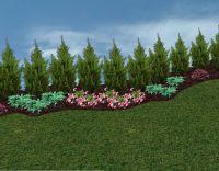 Best 25+ Arborvitae landscaping ideas only on Pinterest ...
