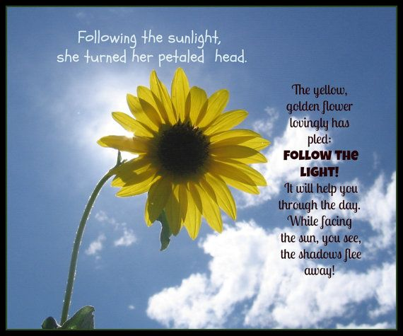 Bts Funny Quotes Wallpaper Sunflower Poem And Picture Motivational Sunflower Poem