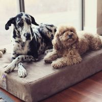 17 Best ideas about Great Dane Bed on Pinterest | Dog beds ...